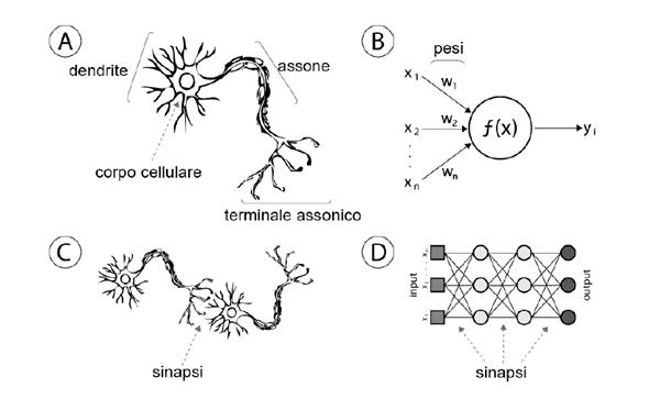 Reti neurali artificiali e naturali a confronto